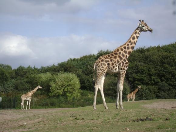 2012 - Safaripark 103