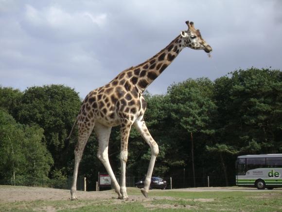 2012 - Safaripark 105