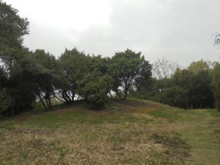 Grafheuvel op de Kampsheide