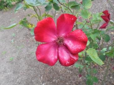 Flower (Belmonte)