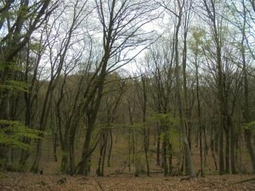 Bomen op Boersberg