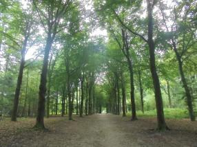 Nog meer bomen in het Baarnse Bos